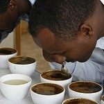 coffee cuppers
